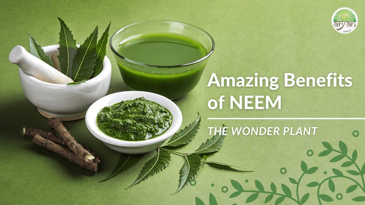 Amazing Benefits of Neem Aryan Herbals Blog