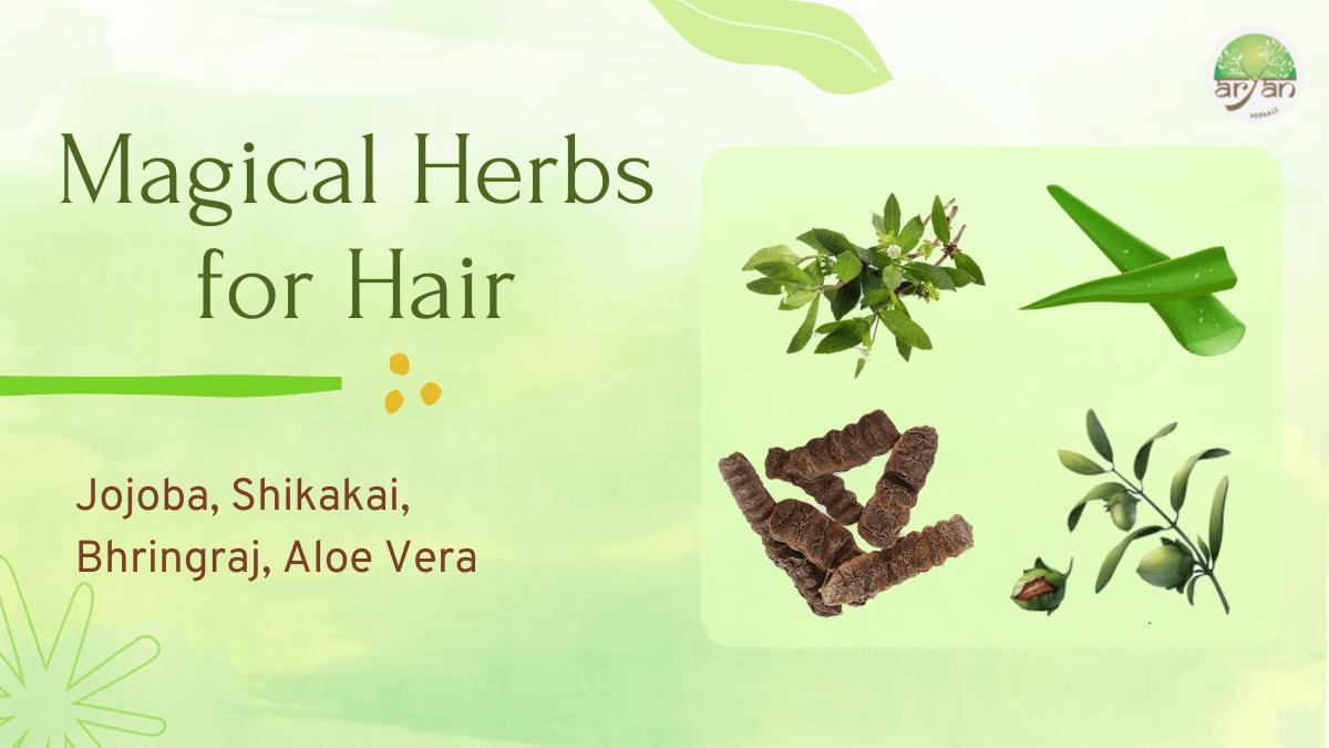 Magical herbs for hair - Aryan Herbals Blog